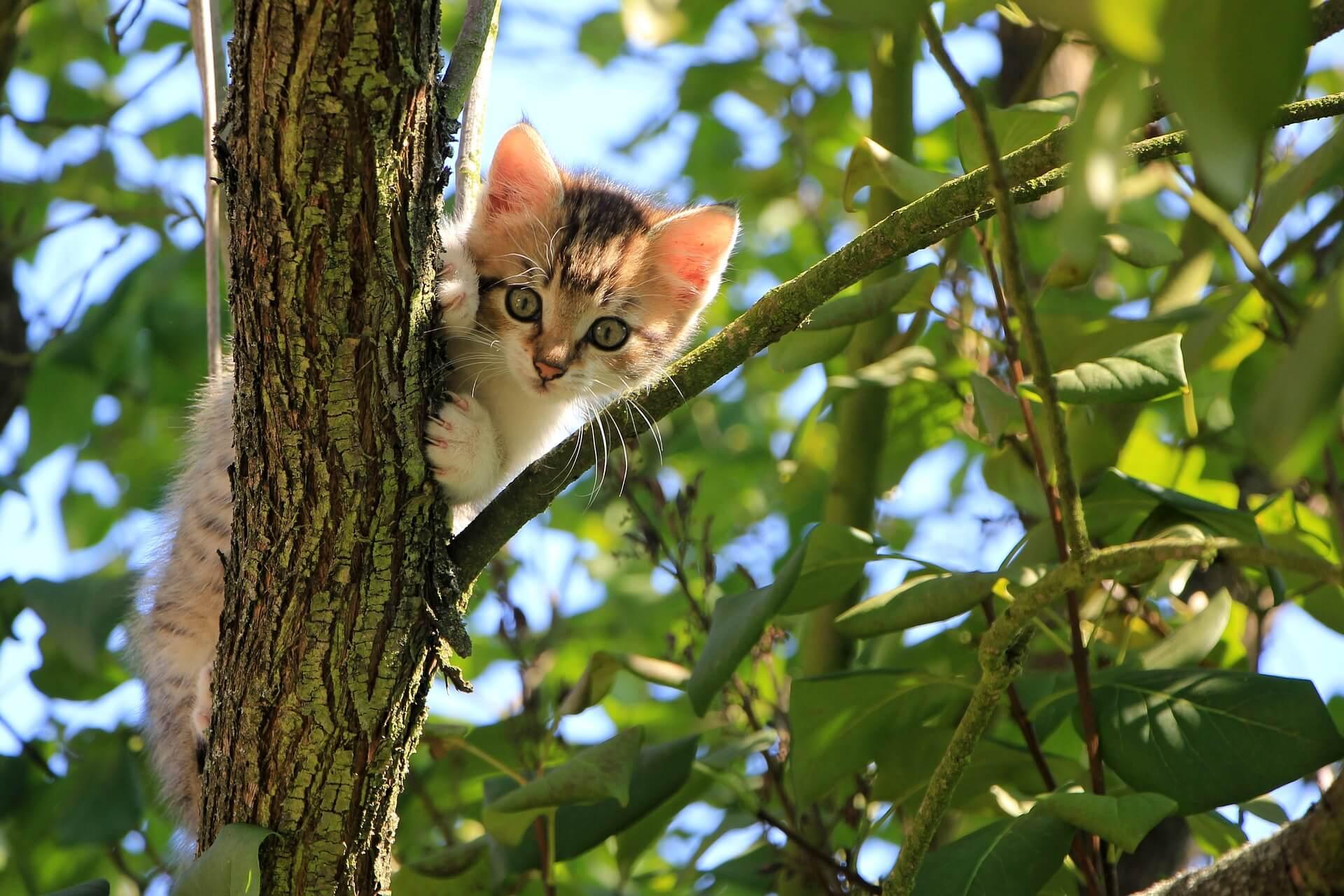 Suesse Katze klettert auf einem Baum und blickt in die Kamera